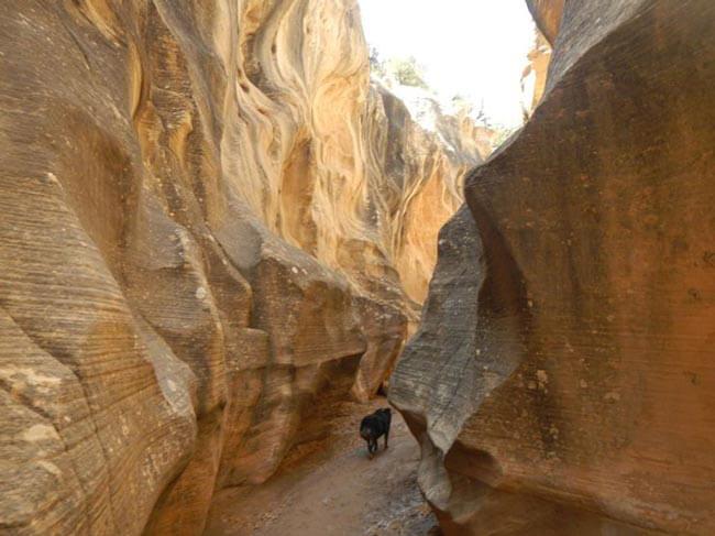 Bryce-Canyon-Narrows-Oxbow-4