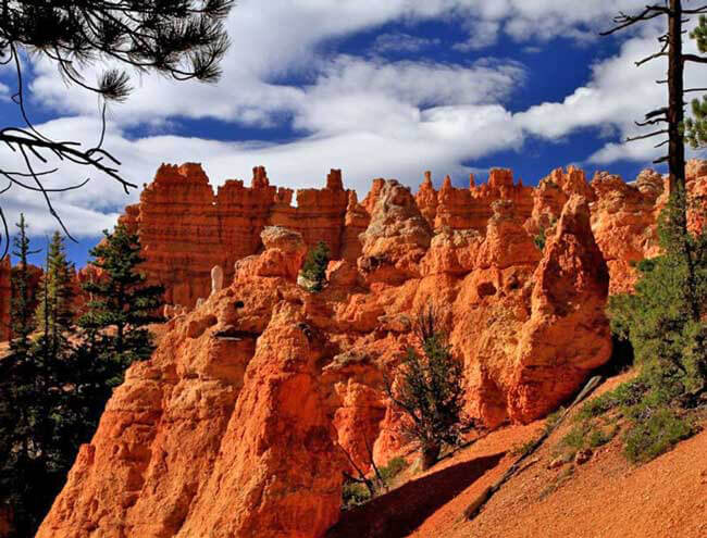 Best Trip Ever! Bryce Canyon, Horses and a Service Project for the U.S. Forest Service