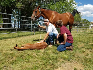 Equine Therapy Imprinting Addressing Sexual Issues