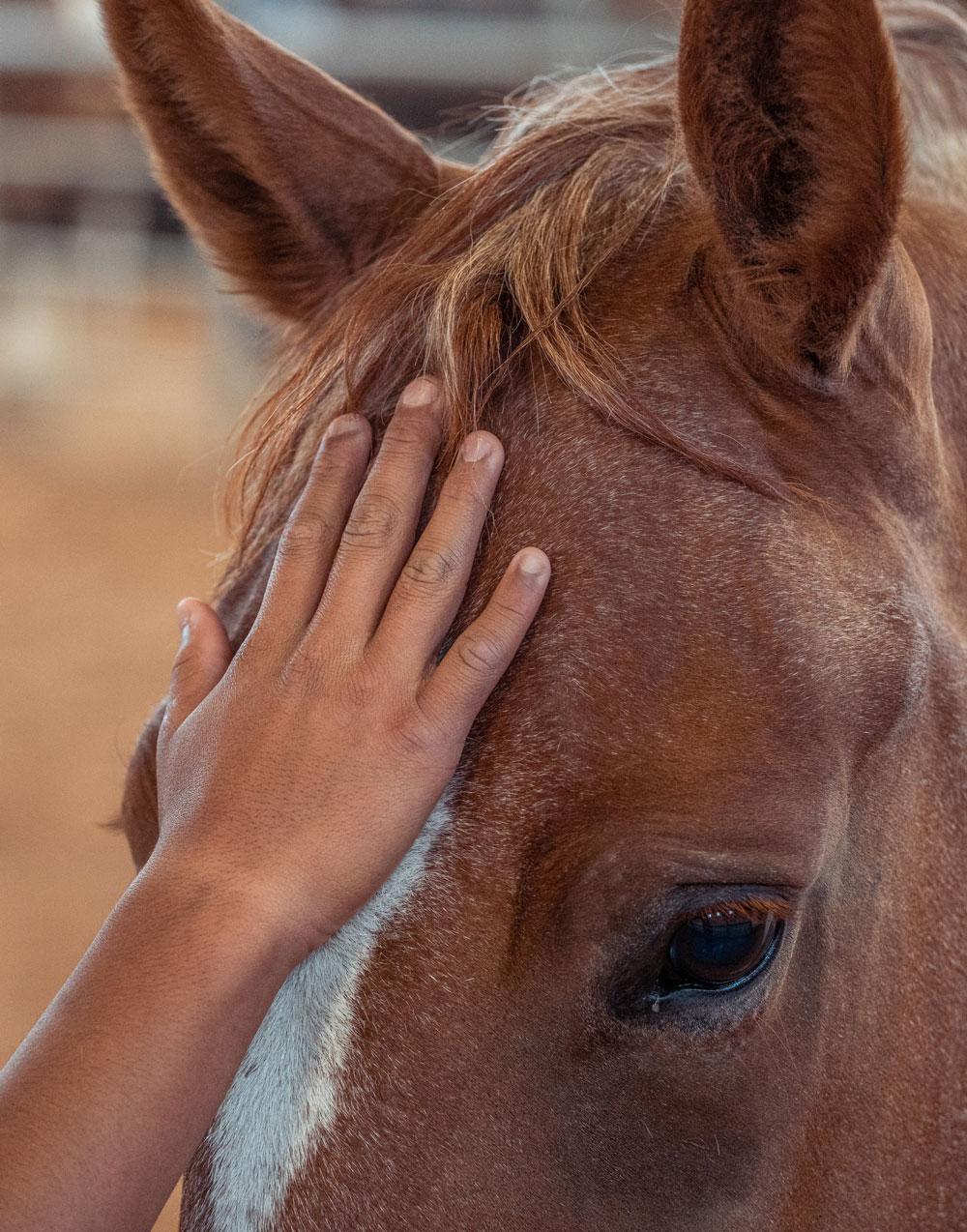 Hand-On-Horse oxbow academy