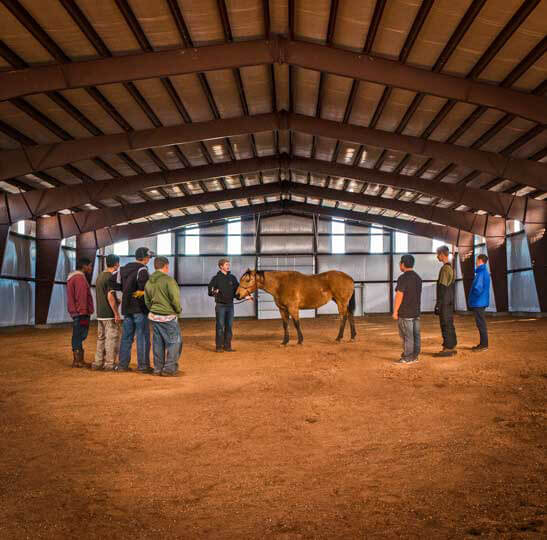Oxbow Experiential therapy equine