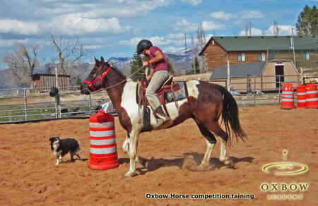 Therapy at a competitive level as Oxbow students place in local horse show competition