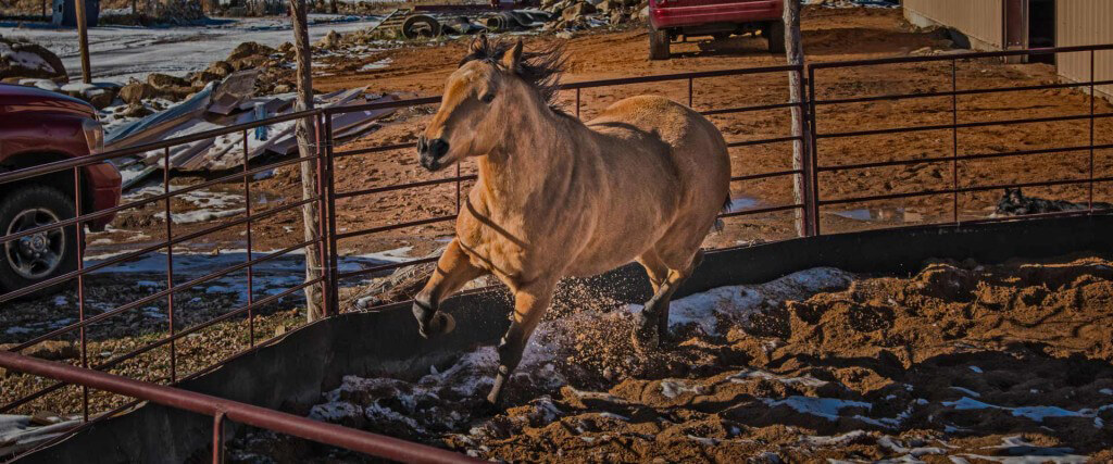 Oxbow Academy Equine Therapy