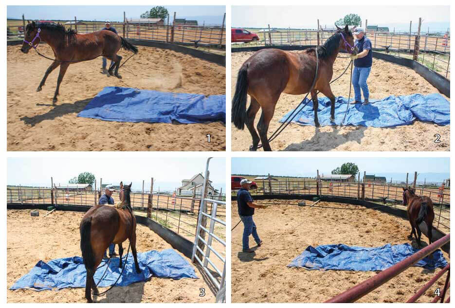 Equine Therapy horse training