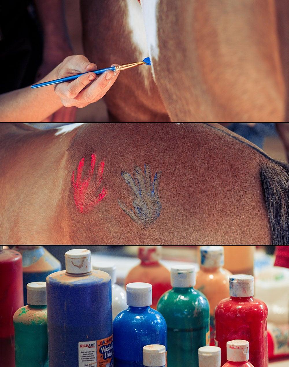 paint-your-pony-oxbow-academy