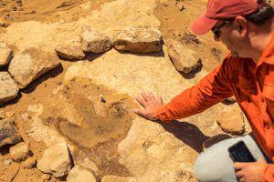 Premiere Treatment Provider Dinosaur Footprint